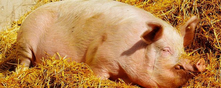 Zasady których należy przestrzegać w celu ochrony gospodarstwa przed wirusem ASF