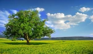 Zmiana przepisów dotyczących wycinki drzew