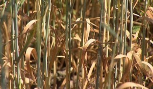 Zgłaszanie szkód w gospodarstwach rolnych