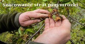 Informacja o szacowaniu strat w uprawach rolnych spowodowanych przez przymrozki wiosenne