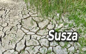 Informacja o szacowaniu strat w uprawach rolnych spowodowanych przez suszę w 2019r