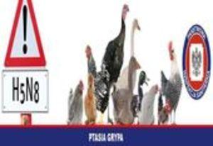 Zagrożenie grypą ptaków