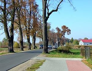 Budowa ścieżki pieszo - rowerowej w m. Dęblin w ciągu drogi wojewódzkiej Nr 801