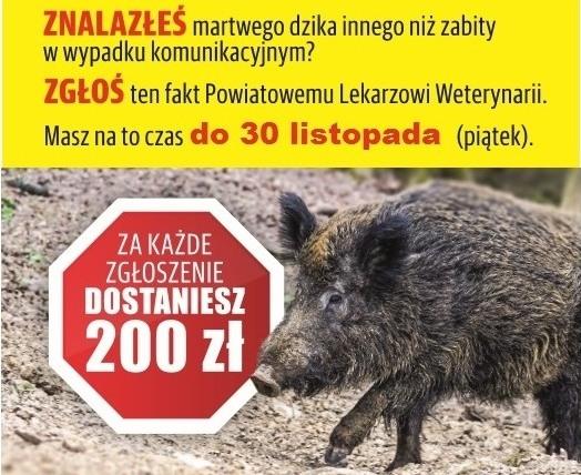 Trwa akcja samorządu województwa przeciw ASF!