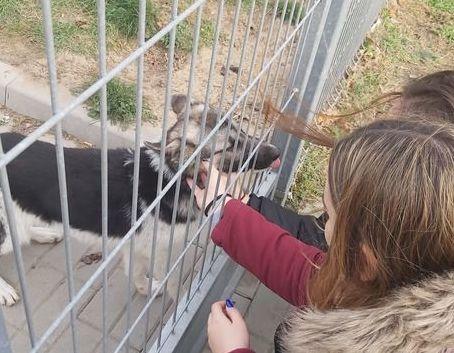 Wyjazd do schroniska dla zwierząt uczniów ZSZ nr 2