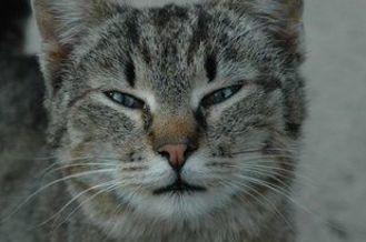 Mój przyjaciel kot