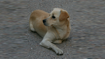 Konsultacje projektu programu opieki nad zwierzętami bezdomnymi na 2015 rok