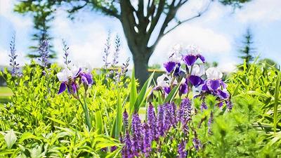Najpiękniejszy Ogród w Gminie Jabłonna