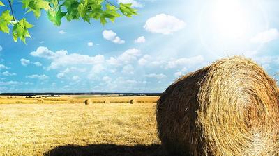 Szacowanie strat - informacja dla rolników