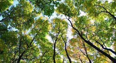 Zaostrzenie przepisów dotyczących zezwolenia na wycinkę drzew od 17 czerwca 2017 r.