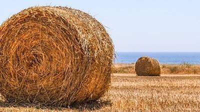 Podatek rolny