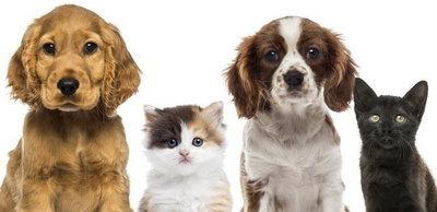 Ogólnopolski miesiąc sterylizacji zwierząt