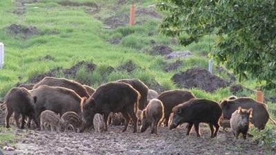 Zmiana przepisów  sprawie szacowania szkód w uprawach wyrządzonych przez zwierzęta - WAŻNE