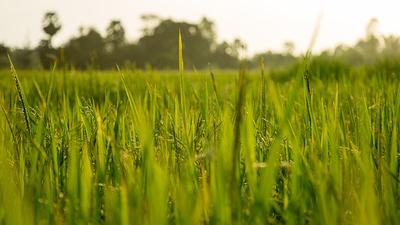 Restrukturyzacja małych gospodarstw rolnych  - dotacje dla rolników