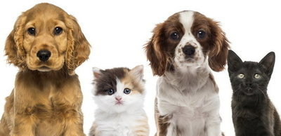 Konsultacje z organizacjami pozarządowymi Programu Opieki nad Zwierzętami na 2019 rok