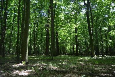Aktywne lato leśnych ludzi