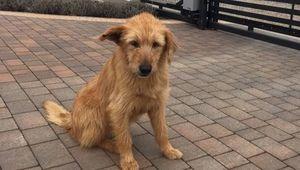 Znaleziono psa w miejscowości Krasienin