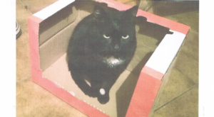 Znaleziono kota w Ciecierzynie