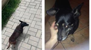 Zaginął pies w miejscowości Rudka Kozłowiecka