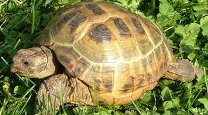 Zaginął żółw w okolicy Elizówki