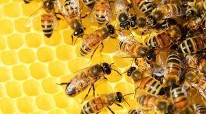 Rozporządzenie Wojewody Lubelskiego ws. zwalczania zgnilca amerykańskiego pszczół