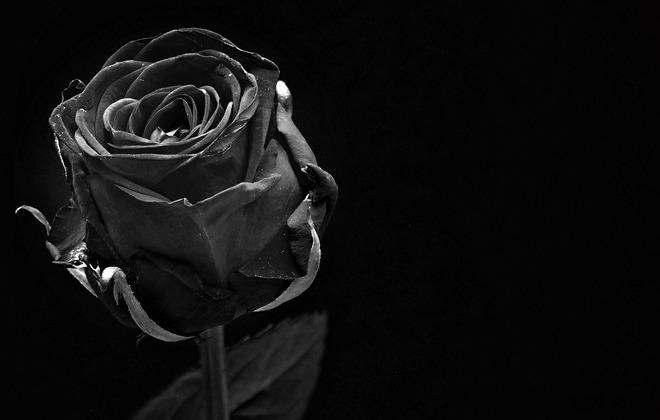 Informacja o śmierci wieloletniego pracownika Starostwa Powiatowego w Rykach