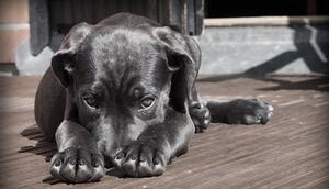 Programu opieki nad zwierzętami bezdomnymi oraz zapobiegania bezdomności zwierząt
