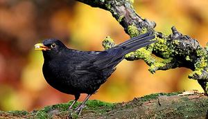 Zapraszamy na wspólne budowanie Budek dla Ptaków