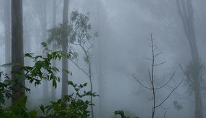 Ostrzeżenie o silnych mgłach