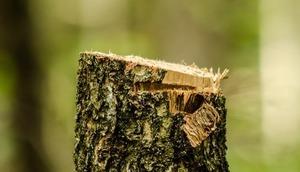 Zgłoszenie zamiaru usunięcia drzew z terenu nieruchomości