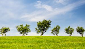Harmonogram zebrań wiejskich w sprawie podziału funduszu sołeckiego na 2020 rok