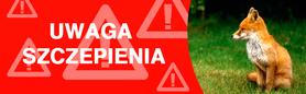 Uwaga Szczepienia lisów!. Komunikat z dn.9-04-2013