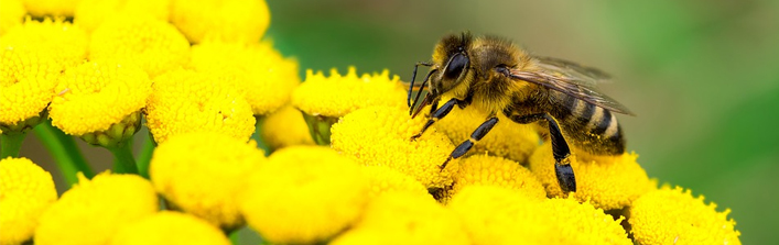 Komunikat o zasadach stosowania ochronnych środków w sposób bezpieczny dla pszczół