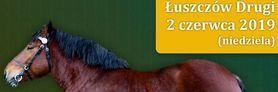III Wojewódzka Wystawa koni Ras Zimnokrwistych
