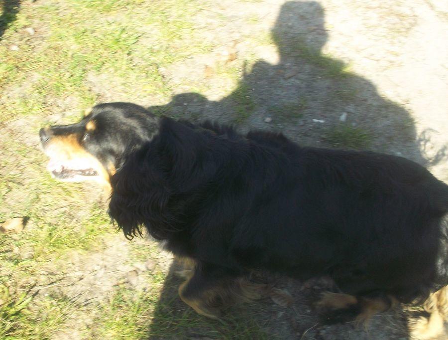 Urząd Miejski w Annopolu poszukuje nowego właściciela dla psa