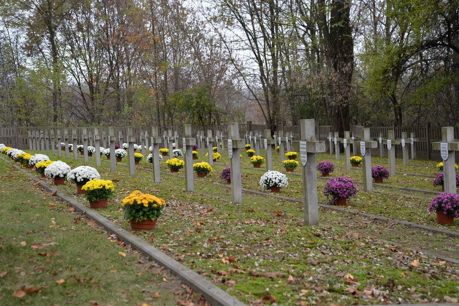 Cmentarz Wojenny przy ul. Balonnej po udekorowaniu chryzantemami.