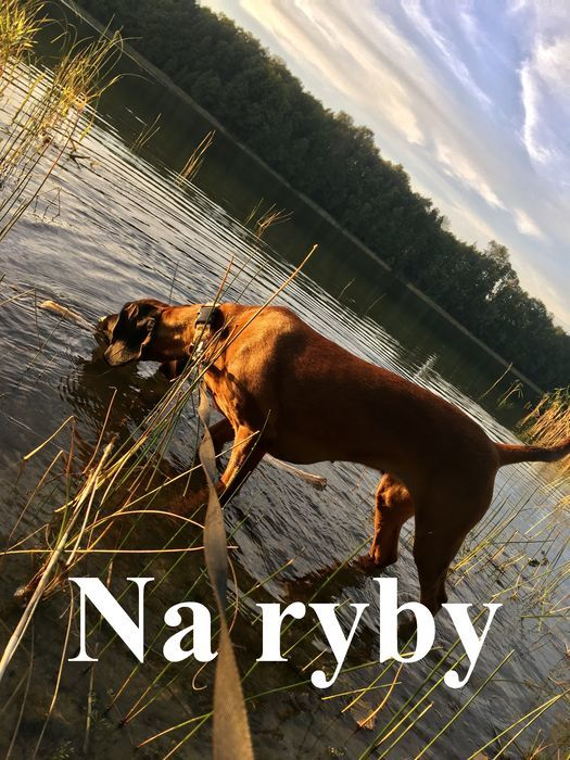 Pies z głową w wodzie