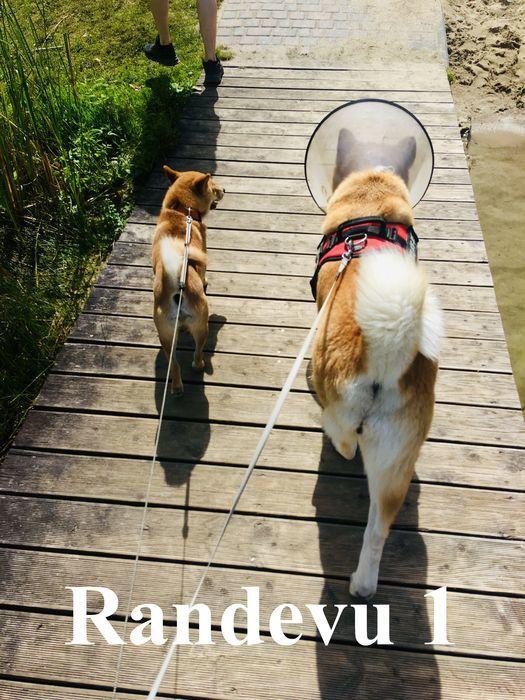 2 psy na spacerze
