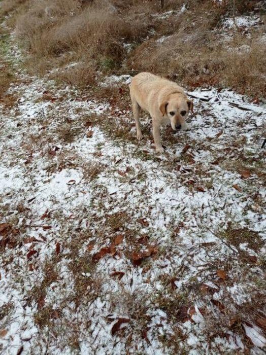Znaleziono psa w okolicach Dunajek