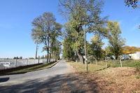 Pozostałości parku w dawnym zespole folwarcznym w Łuszczowie Drugim