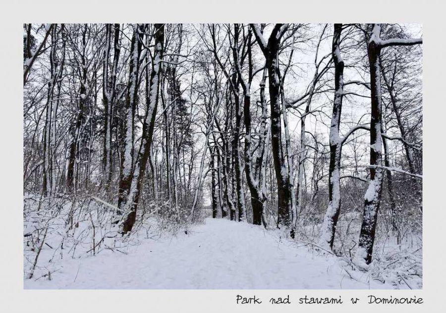 Parka nad stawami w Dominowie