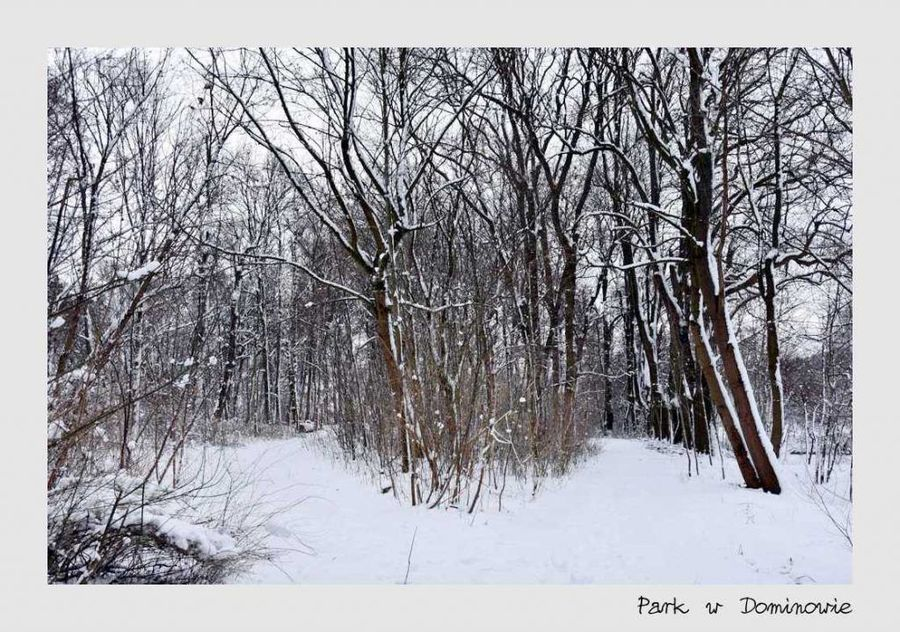 Parka w Dominowie
