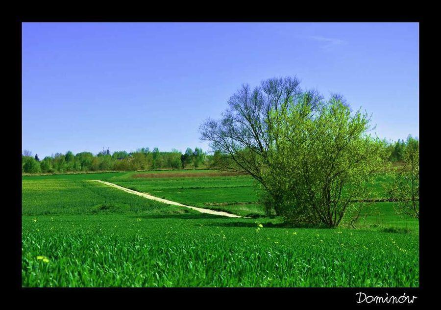 Krajobraz Dominów
