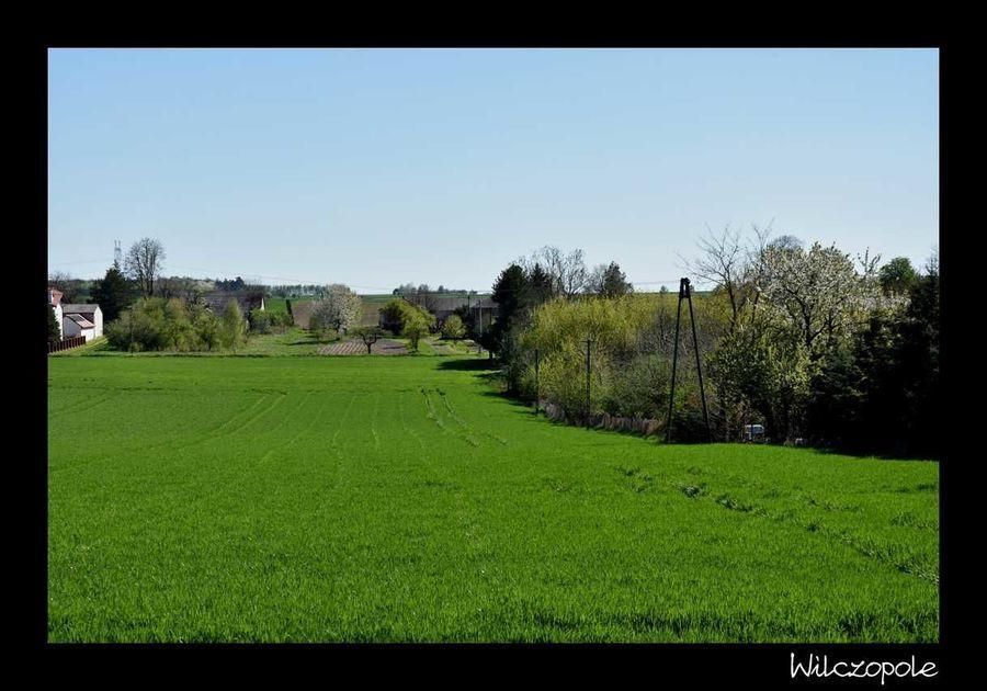 Krajobraz Wilczopole