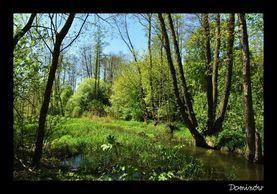Wiosenny spacer po Gminie Głusk