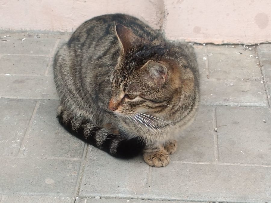 Malutka koteczka szuka domu!