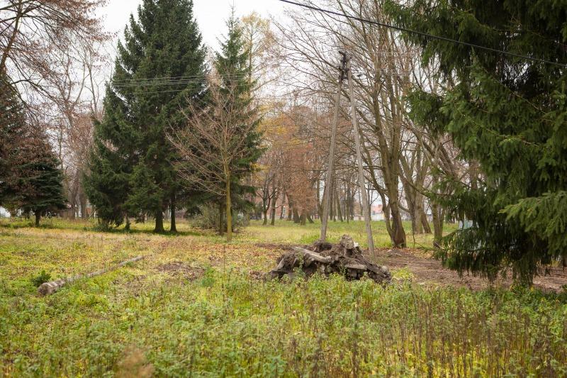 Rewitalizacja parku w m. Niemce