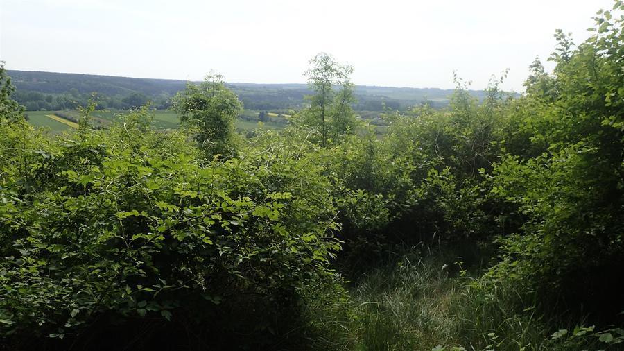 <p>Janowiecki park</p>