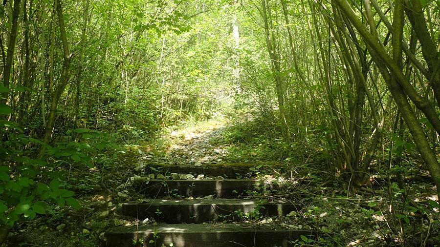 <p>Okolice Janowca - droga na wzgórze zamkowe</p>