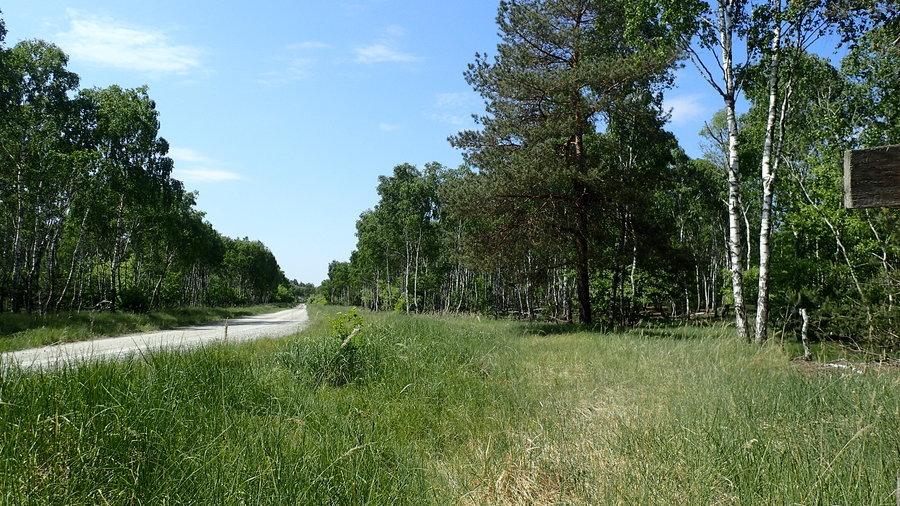 <p>Las w okolicach ZAPuławy</p>